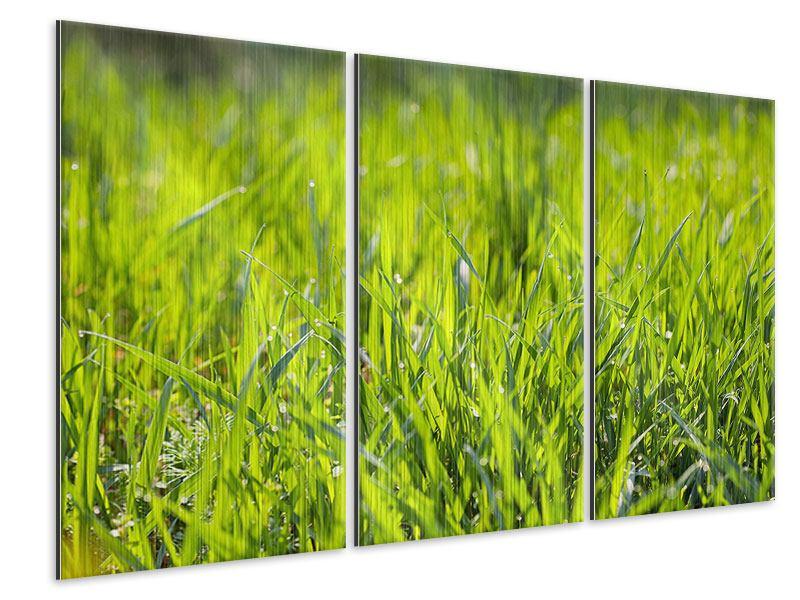 Metallic-Bild 3-teilig Gras im Morgentau