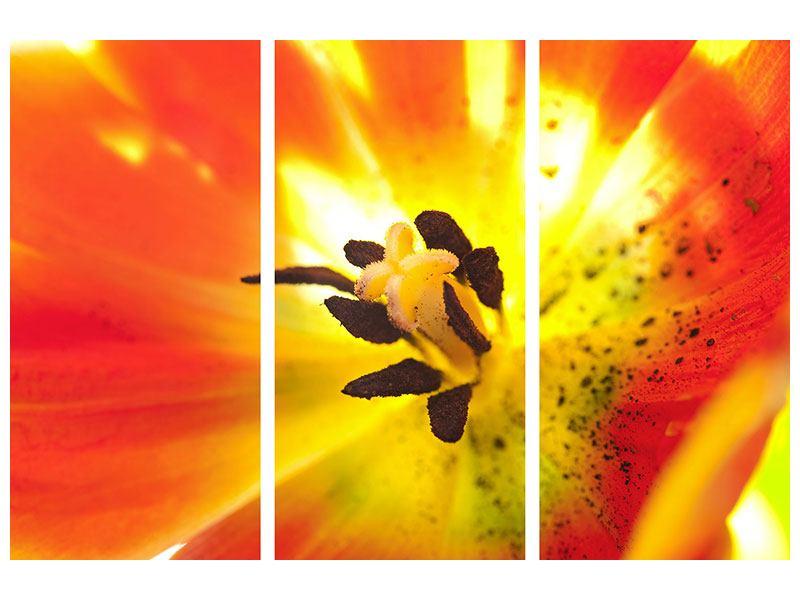 Metallic-Bild 3-teilig Die Narbe einer Tulpe XXL