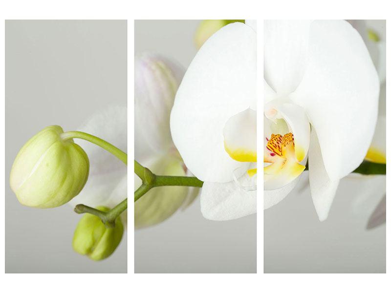 Metallic-Bild 3-teilig Riesenorchidee