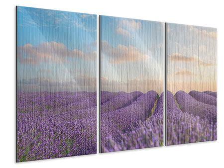 Metallic-Bild 3-teilig Das blühende Lavendelfeld