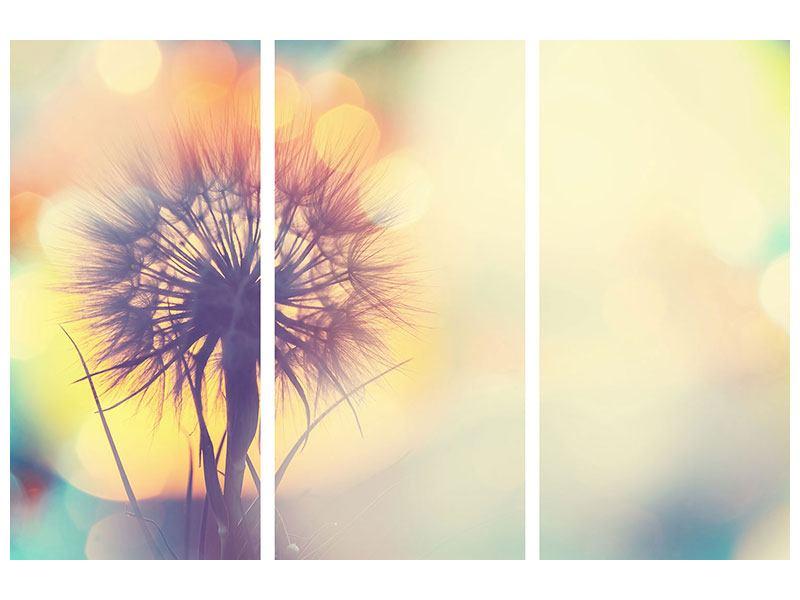 Metallic-Bild 3-teilig Die Pusteblume im Licht