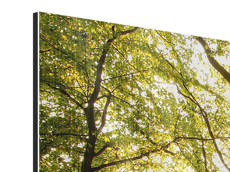 Metallic-Bild 3-teilig Sonnenuntergang zwischen den Bäumen