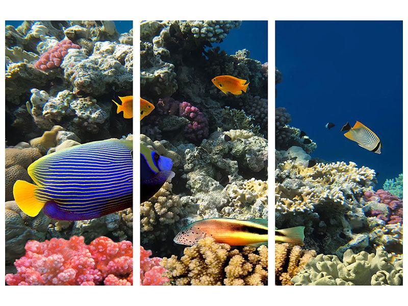 Metallic-Bild 3-teilig Das Aquarium