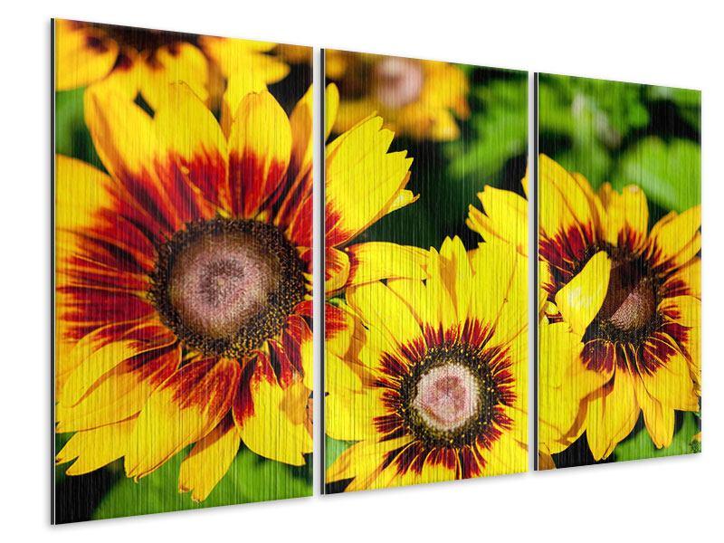 Metallic-Bild 3-teilig Reife Sonnenblumen