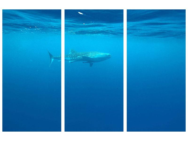 Metallic-Bild 3-teilig Der Walhai