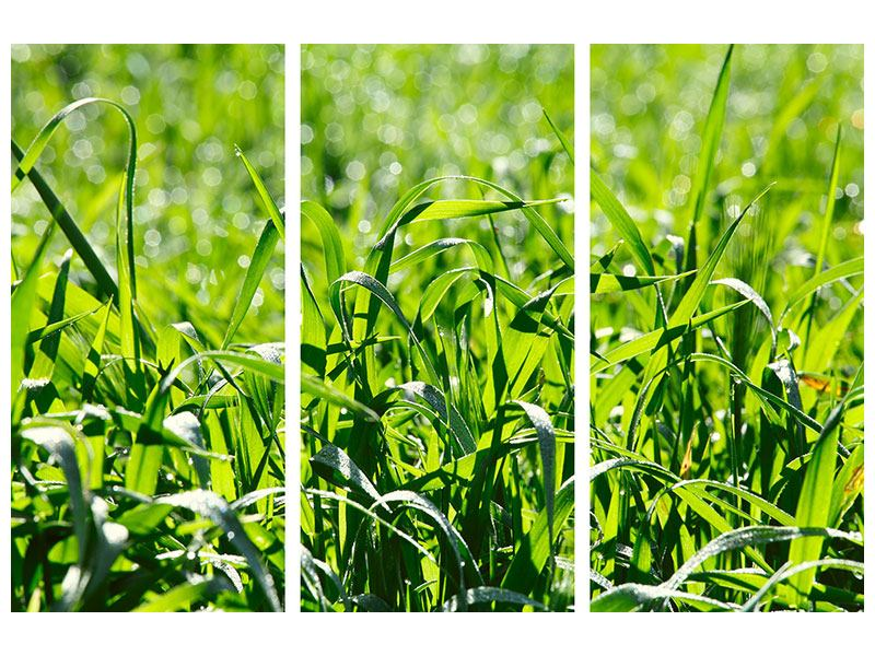 Metallic-Bild 3-teilig Sonniges Gras