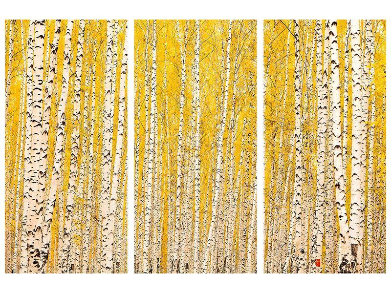 Metallic-Bild 3-teilig Der Birkenwald im Herbst
