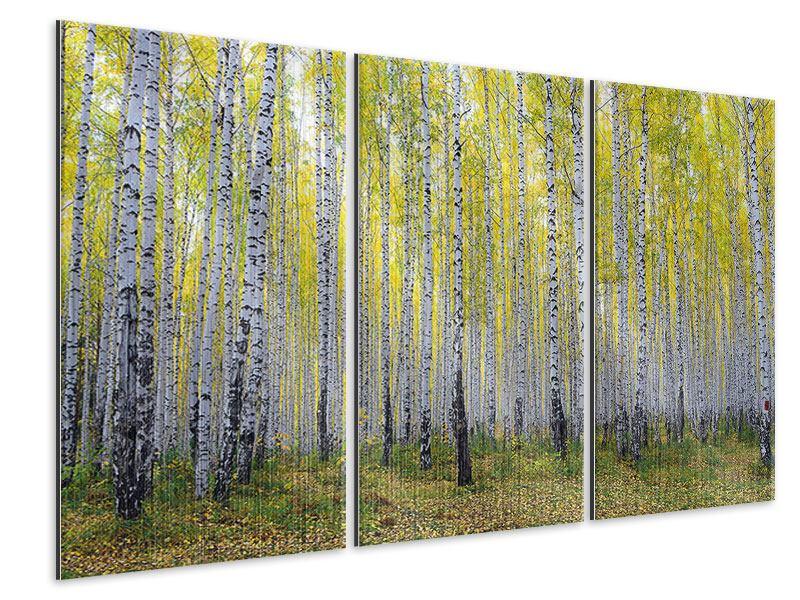 Metallic-Bild 3-teilig Herbstlicher Birkenwald