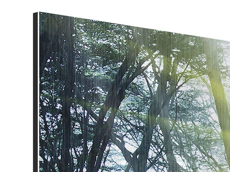 Metallic-Bild 3-teilig Sonnenstrahlen im Wald