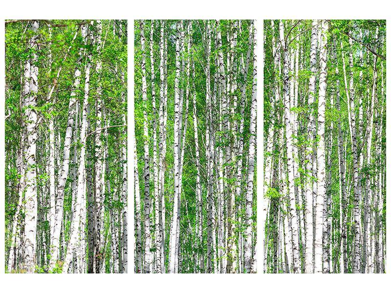 Metallic-Bild 3-teilig Der Birkenwald