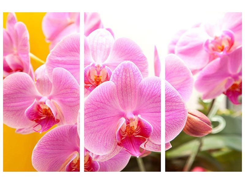 Metallic-Bild 3-teilig Königliche Orchideen