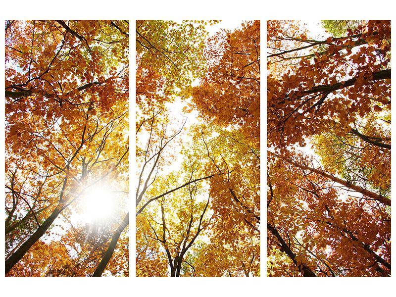 Metallic-Bild 3-teilig Herbstbäume