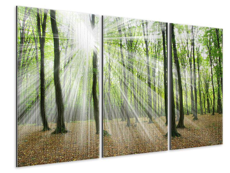 Metallic-Bild 3-teilig Magisches Licht in den Bäumen