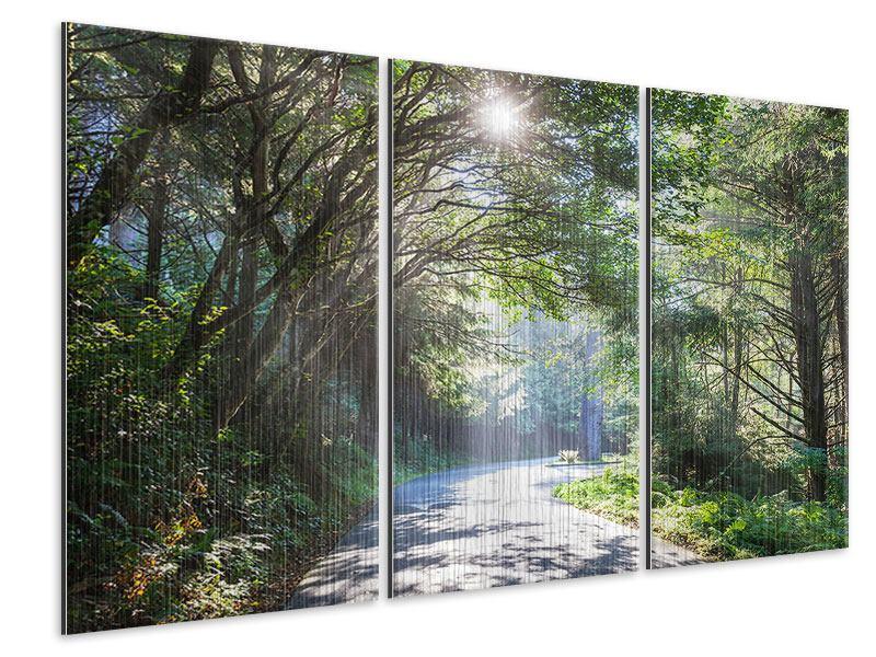 Metallic-Bild 3-teilig Sonniger Waldweg