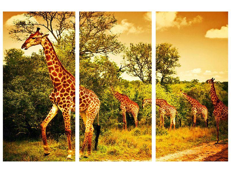 Metallic-Bild 3-teilig Südafrikanische Giraffen