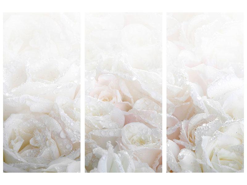 Metallic-Bild 3-teilig Weisse Rosen im Morgentau
