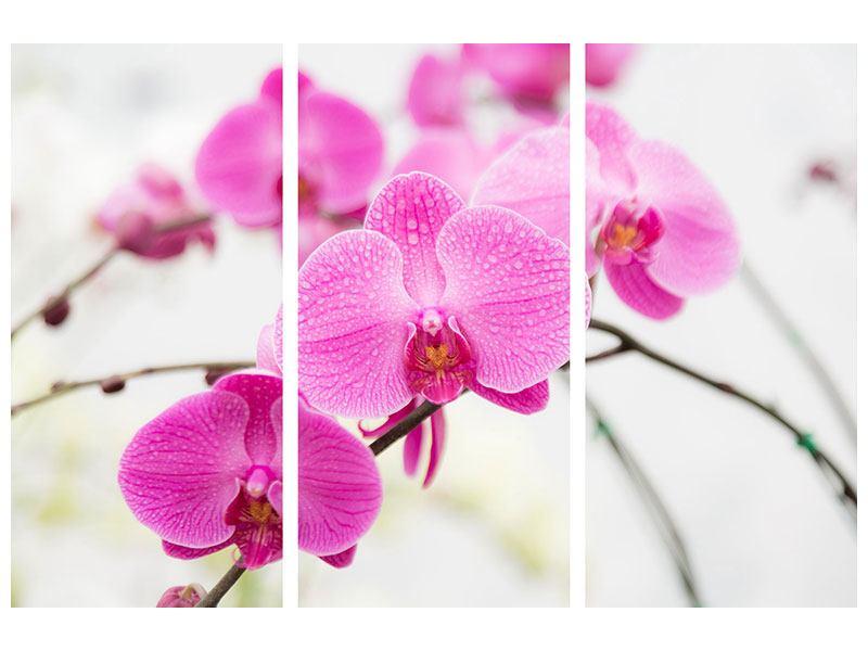 Metallic-Bild 3-teilig Das Symbol der Orchidee