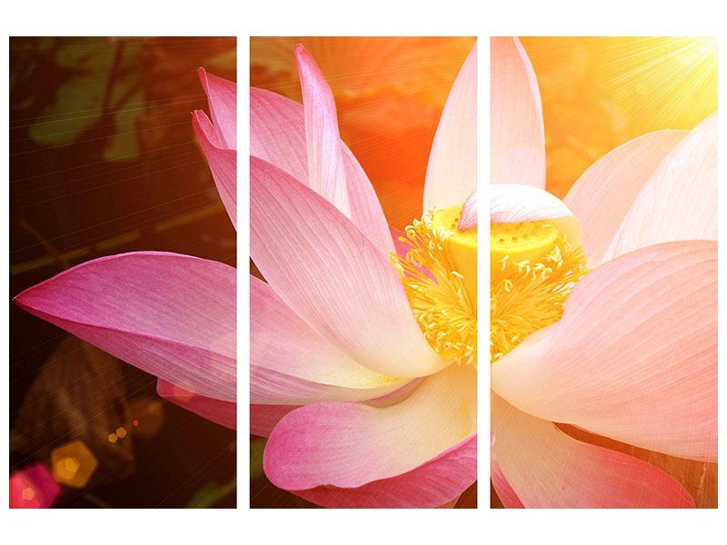 Metallic-Bild 3-teilig Close Up Lotus