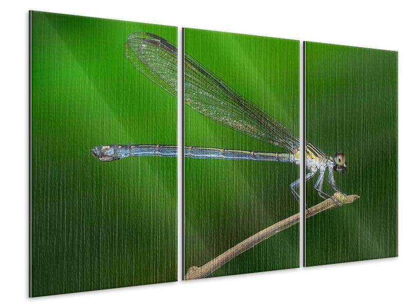 Metallic-Bild 3-teilig Die Libelle