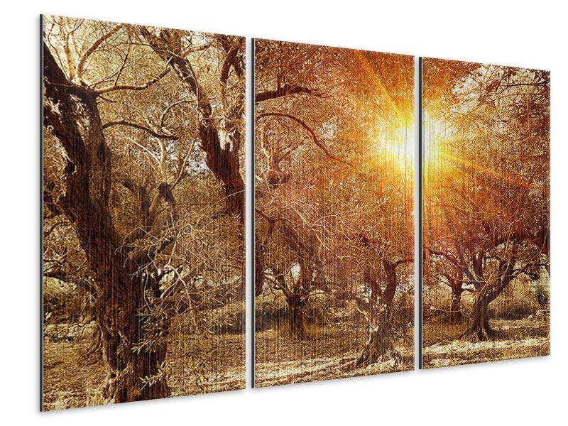 Metallic-Bild 3-teilig Olivenbäume im Herbstlicht