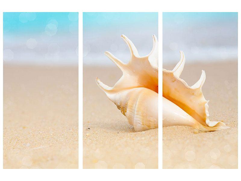 Metallic-Bild 3-teilig Die Muschel am Strand