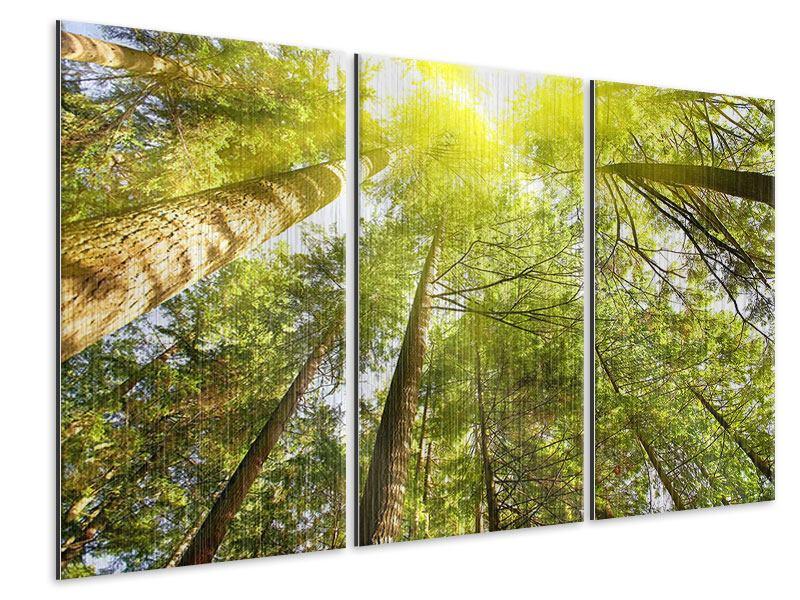 Metallic-Bild 3-teilig Baumkronen in der Sonne