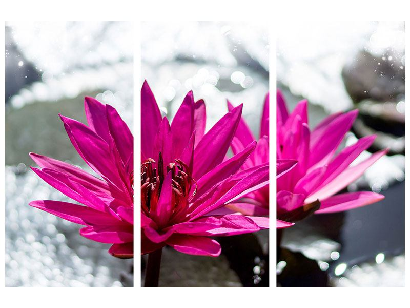 Metallic-Bild 3-teilig Seerosenduo in Pink