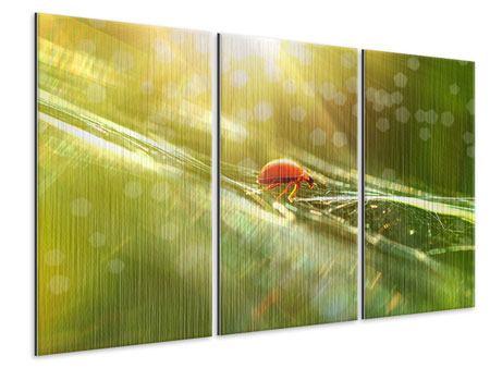 Metallic-Bild 3-teilig Marienkäfer im Sonnenlicht