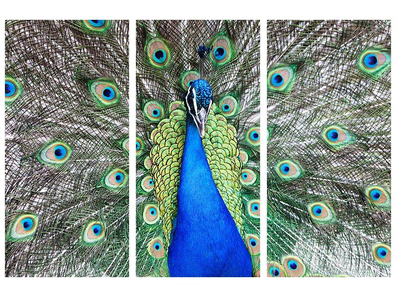 Metallic-Bild 3-teilig Blauer Pfau