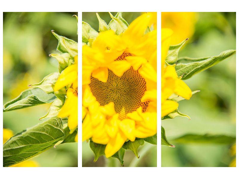 Metallic-Bild 3-teilig Wilde Sonnenblume