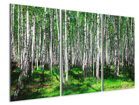 Metallic-Bild 3-teilig Sommerlicher Birkenwald