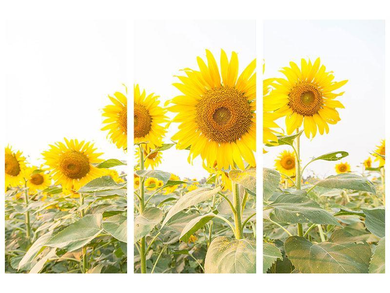 Metallic-Bild 3-teilig Das Sonnenblumenfeld