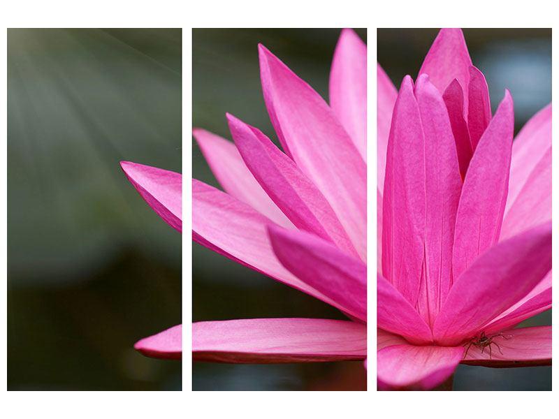 Metallic-Bild 3-teilig XXL Seerose in Pink