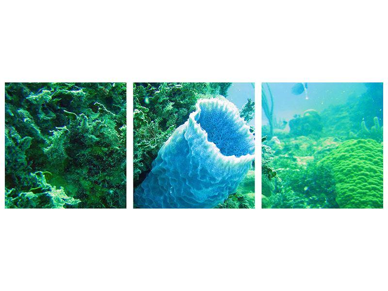 Panorama Metallic-Bild 3-teilig Korallen