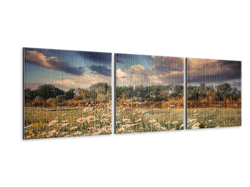 Panorama Metallic-Bild 3-teilig Die Wiesenmargerite am Fluss