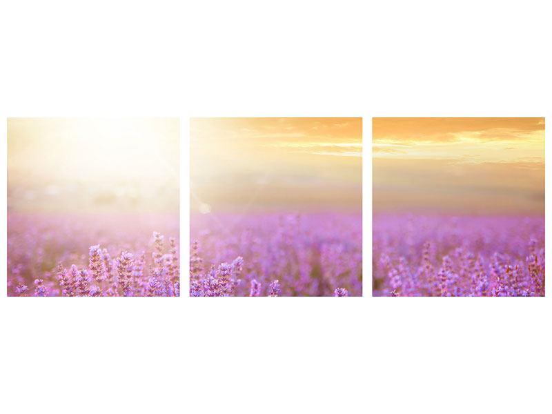 Panorama Metallic-Bild 3-teilig Sonnenuntergang beim Lavendelfeld