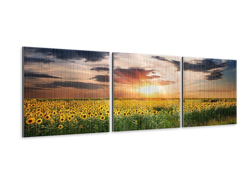Panorama Metallic-Bild 3-teilig Ein Feld von Sonnenblumen