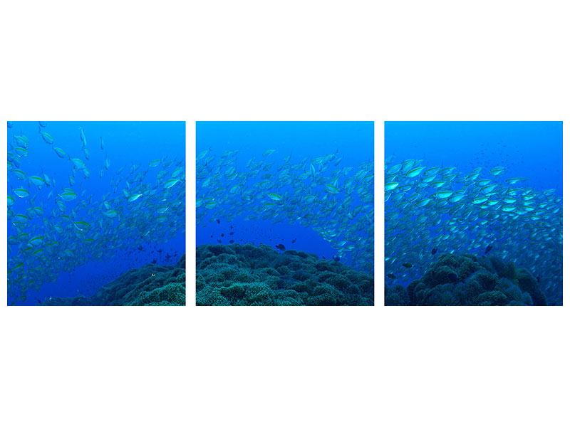 Panorama Metallic-Bild 3-teilig Fischschwärme