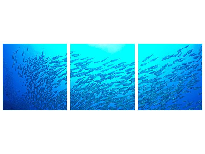 Panorama Metallic-Bild 3-teilig Fischwelt