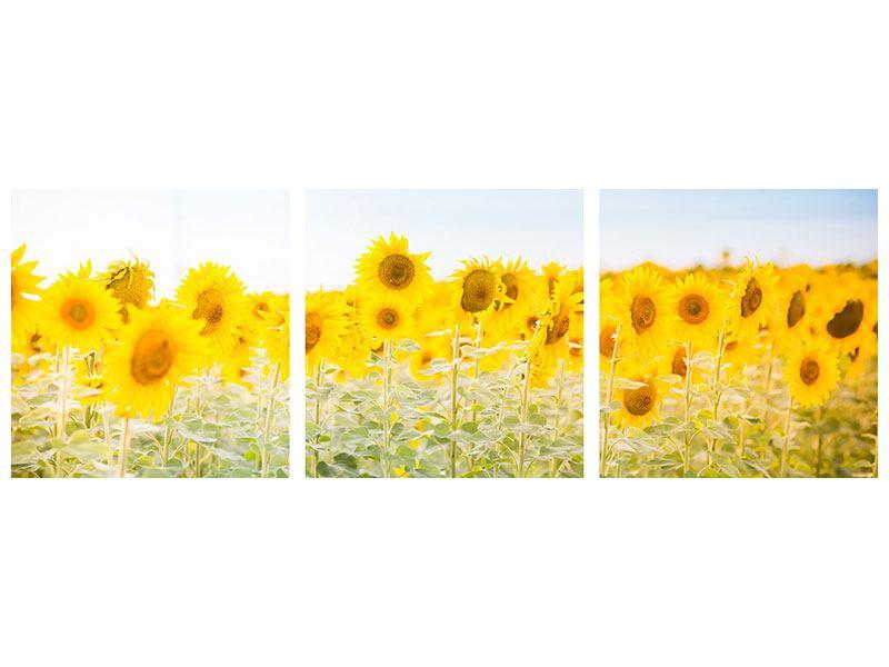 Panorama Metallic-Bild 3-teilig Im Sonnenblumenfeld