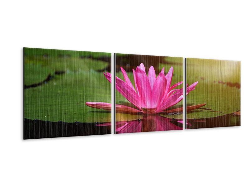 Panorama Metallic-Bild 3-teilig Lotus im Wasser