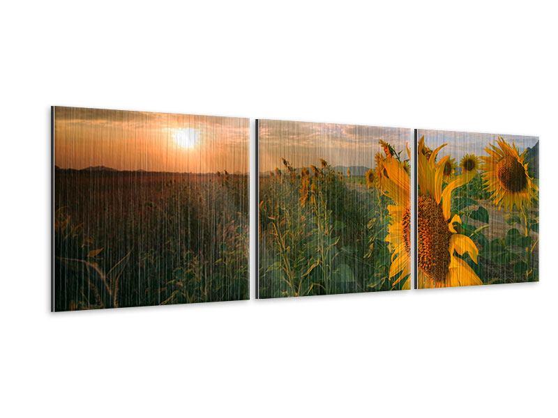 Panorama Metallic-Bild 3-teilig Sonnenblumen im Lichtspiel