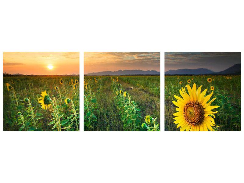 Panorama Metallic-Bild 3-teilig Sonnenblumenfeld im Abendrot