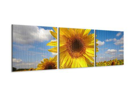 Panorama Metallic-Bild 3-teilig Das Feld der Sonnenblumen