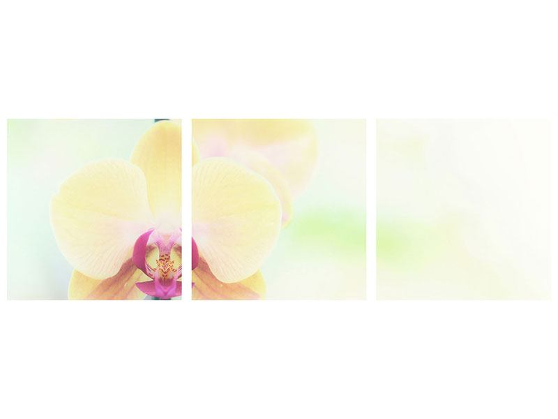 Panorama Metallic-Bild 3-teilig Lovely Orchidee