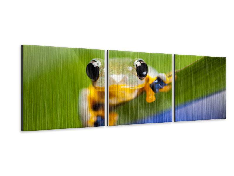Panorama Metallic-Bild 3-teilig Frosch XXL