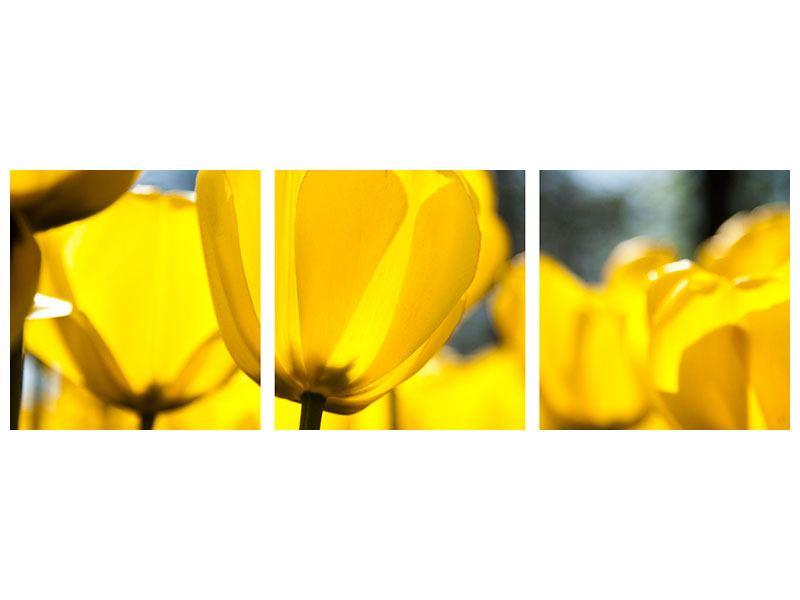Panorama Metallic-Bild 3-teilig Gelbe Tulpen in XXL