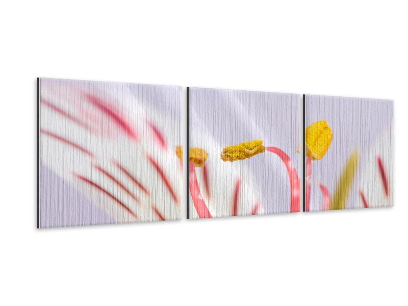 Panorama Metallic-Bild 3-teilig Close Up Die exotische Schönheit