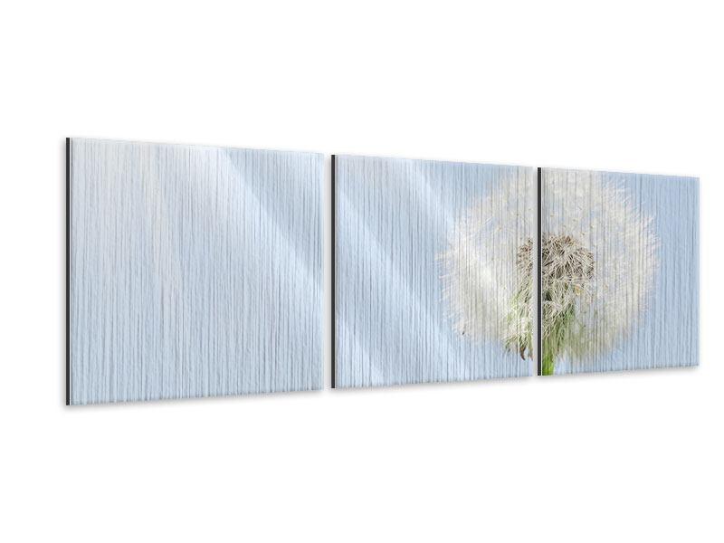 Panorama Metallic-Bild 3-teilig Der Löwenzahn im Sonnenstrahl