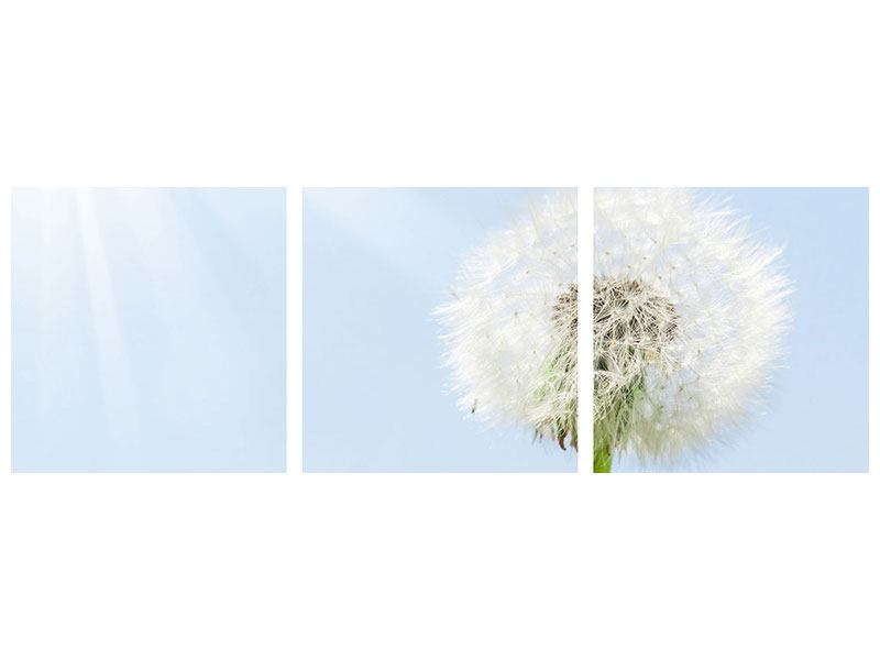 Panoramic 3 Piece Metallic Print Dandelion In Sunbeam